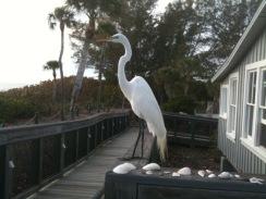 Egret on Deck of Hermitage Arts Retreat