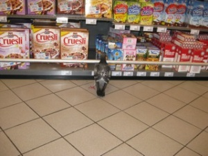 Pigeon in Dutch Convenience Store