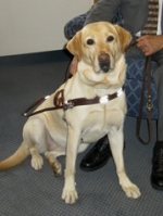 guide dog, Nira